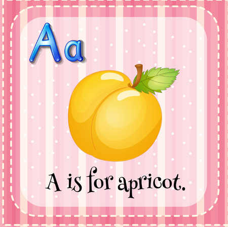 apricot: Illustration of an alphabet A is for apricot Illustration