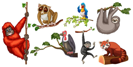 endangered: Illustration of different animals on branches