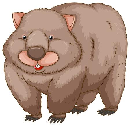 wombat: Un wombat sobre un fondo blanco