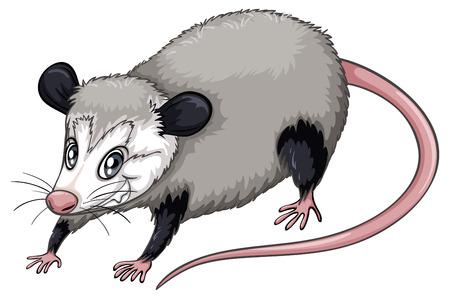 opossum: Illustration of a  close up opossum