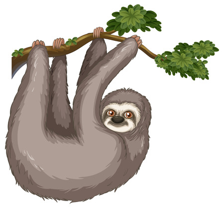 Illustration of a sloth hanging on a branch