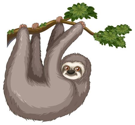 oso perezoso: Ilustración de un colgante pereza en una rama