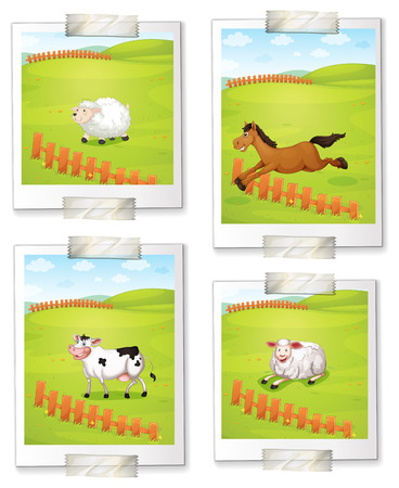 Four photos of animals at the farm on a white background Vector