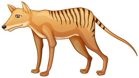 endangered: Illustration of a close up tasmanian tiger