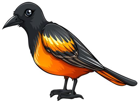 closeup: Illustration of a closeup beautiful bird