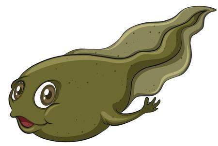 tiny frog: A tadpole on a white background