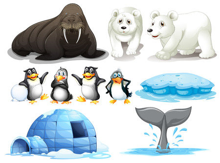 Penguins: Illustration of different animals from north pole