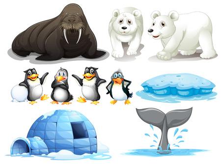 Ilustración de los diferentes animales del polo norte