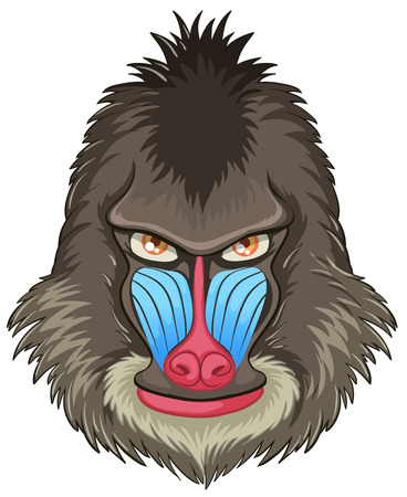 baboon: Illustration of a mandrill baboon head