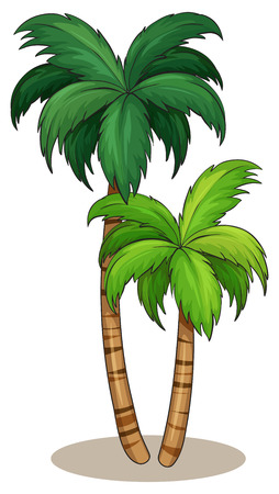 Illustration of a close up palm tree