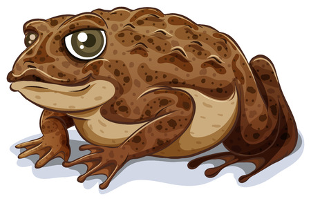 Illustration of a close up toad Reklamní fotografie - 36430941