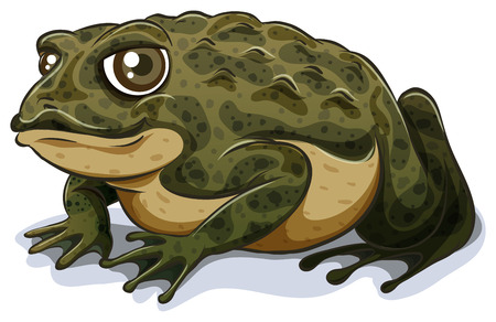 Illustration of a single close up toad