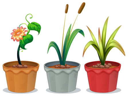 three leaves: Illustration of three potted plants