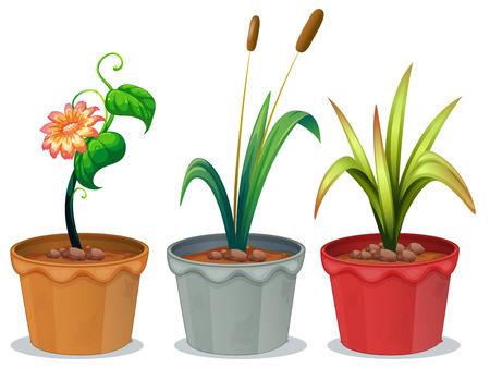 ollas de barro: Ilustración de tres plantas en macetas