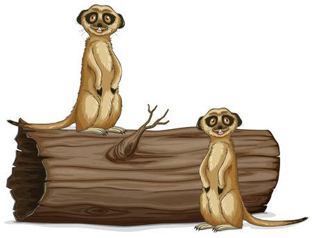 Illustration of two meerkats on the log Illustration