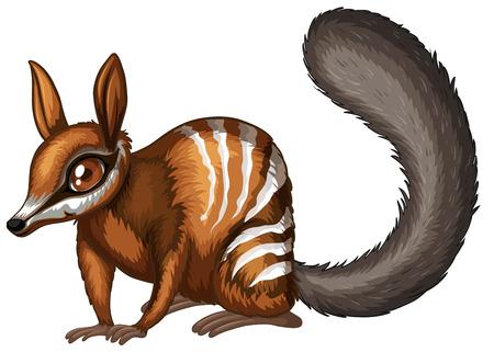 endangered: Illustration of a close up numbat Illustration