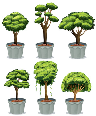 Illustration of six potted plants Vector