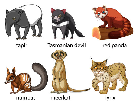 lynx: Illustration of six different kind of animals