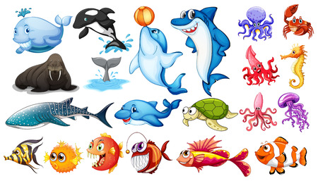 caballo de mar: Ilustración de diferentes tipos de animales marinos