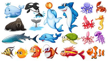 delfin: Ilustracja z różnych rodzajów zwierząt morskich Ilustracja