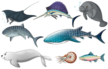 sharks: Illustration of different kind of ocean creatures Illustration