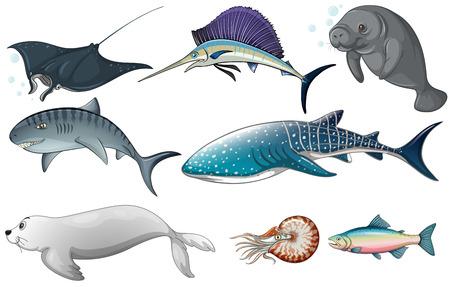 pez espada: Ilustración de diferentes tipos de criaturas del océano