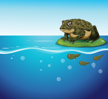 pond life: Illustration of a frog and three tadpoles in the water