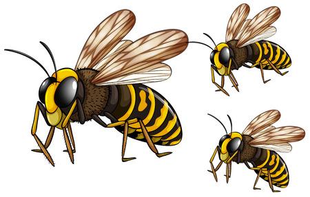 フライング 3 ハチのイラスト