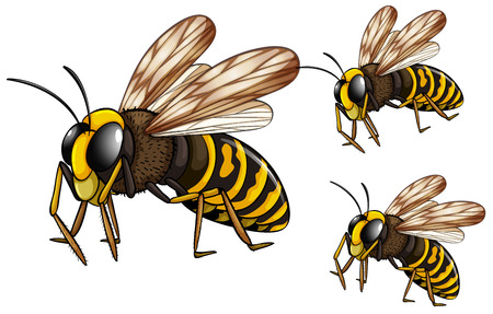 Illustration of three wasps flying