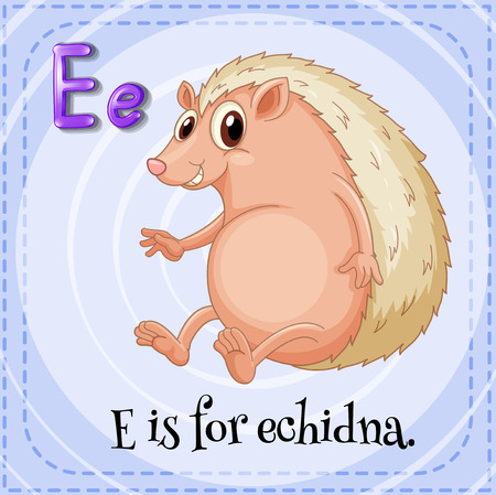echidna: E is for echidna
