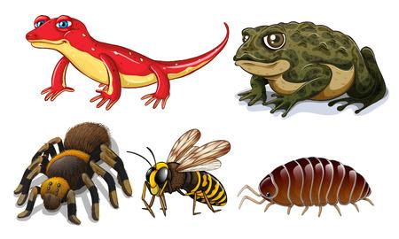 caricaturas de ranas: Cinco tipos diferentes de animales peque�os Vectores