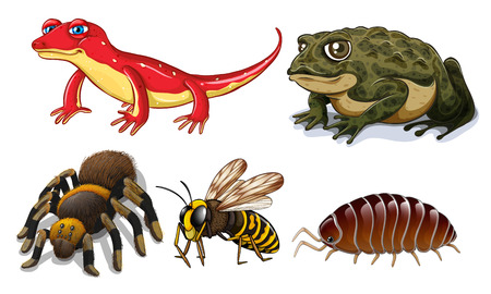 cartoon bug: Five different types of small animals
