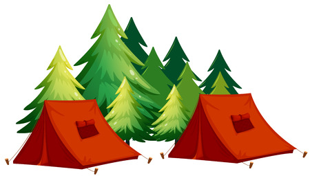 camping equipment: Tents and pine tree