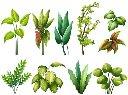 Different kind of plants Vector