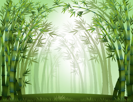 misty forest: View of bamboo forest at daytime