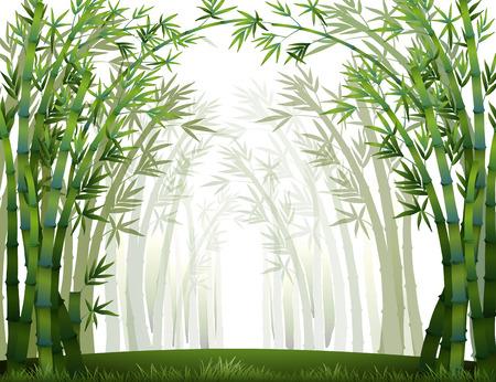 Bamboebos wanneer het vol van mist