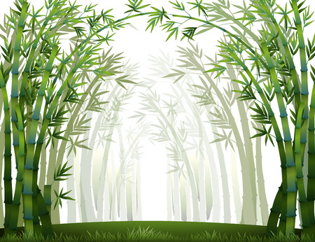 forest clipart: Bamboo forest when it full of fog