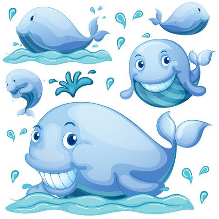 ballena azul: Conjunto de azul bajo el agua ballena Vectores