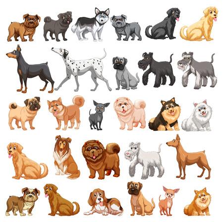 perro caricatura: Diferentes tipos de perros pequeños y grandes
