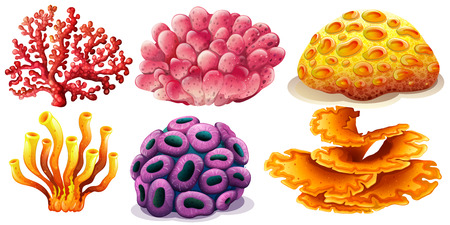 aquatic animal: Six  different type of colorful coral reef