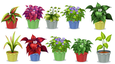 Potted plants: Different kinds of potted plants for gardening