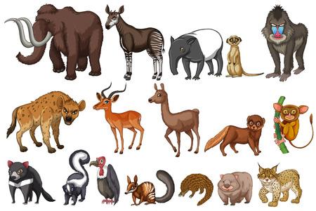 Verschillende soorten zeldzame dieren Stock Illustratie