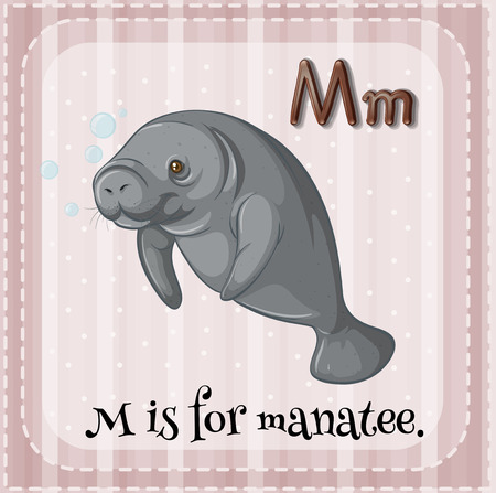 manatee: Flashcard letter m is for manatee Illustration