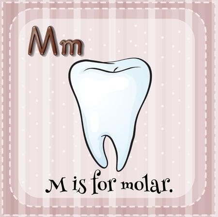 molar: Flashcard letter m is for molar Illustration