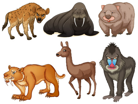 rare animals: Six different kind of rare animals Illustration