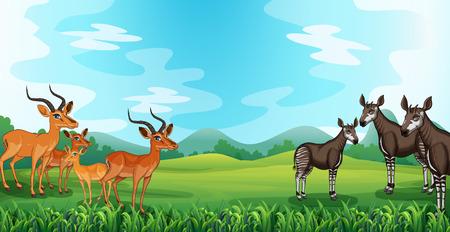 rare animals: Rare animals standing on the green field