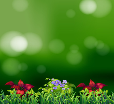 garden landscape: Green grass and beautiful flowers with green background