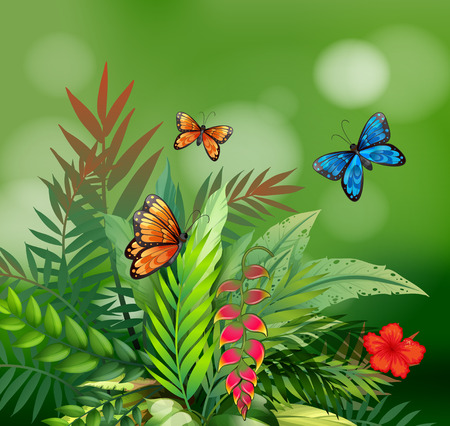 Scene of nature with butterflies and fern Vector