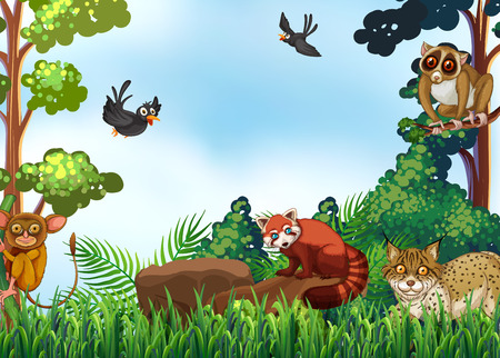 jungle scene: Many animals in the forest