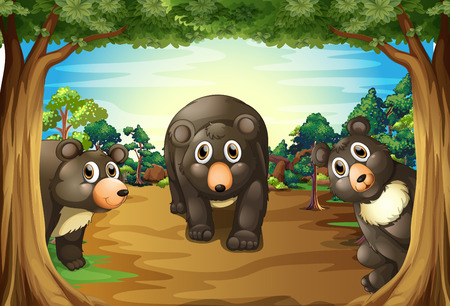 national parks: Three bears living in the jungle Illustration
